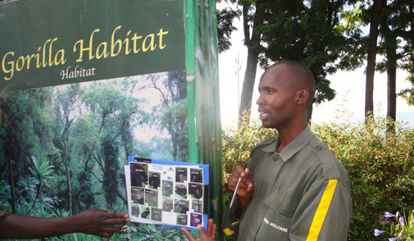 Montanha de gorilas Ruanda: uma viagem na África