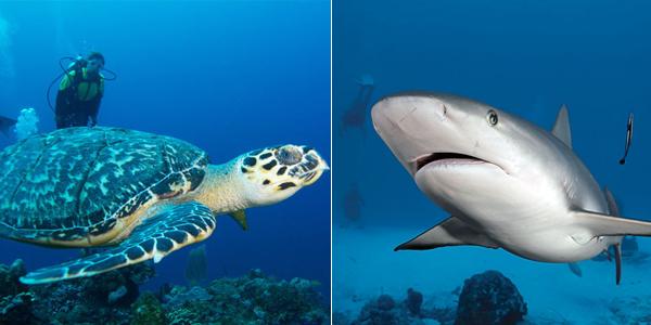 Mergulho em Turks e Caicos
