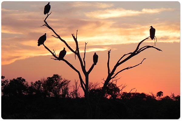 Viagem para Botswana: o espetáculo do Delta do Okavango