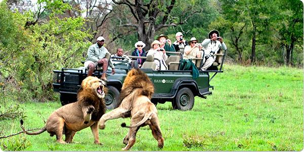 Lua de mel na África do Sul: aventura, safáris e natureza