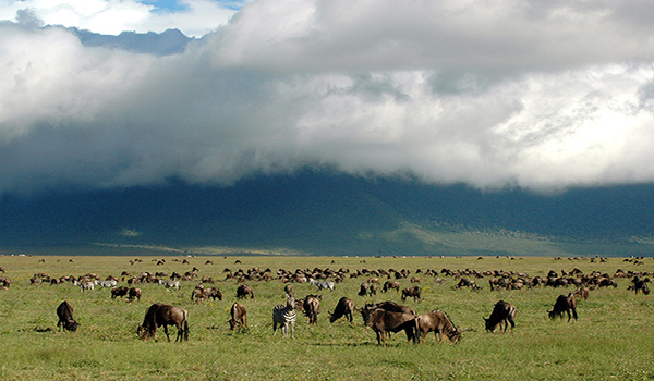 Tanzânia e a Grande Migração de animais - safáris fotográficos incríveis