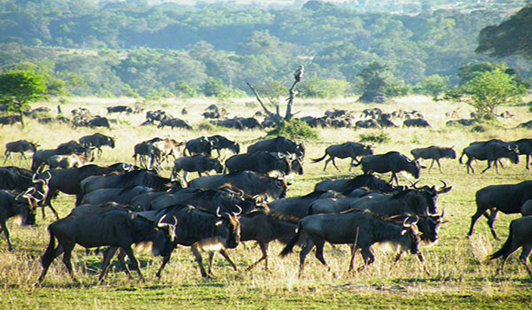 2-andbeyond-luxury-safaris-tanzania