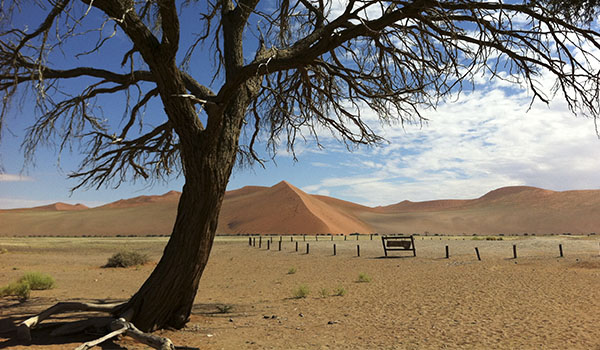 Namíbia o que fazer: safáris pelo deserto, animais e tribos nômades