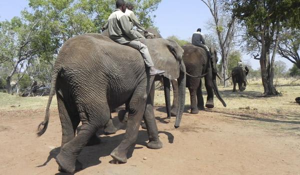 África: os animais, os safáris fotográficos e as experiências de viagem