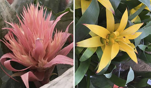 Flores de Holambra