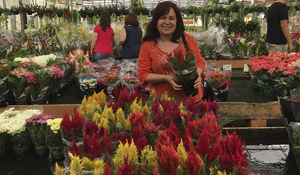 Flores de Holambra e da Expoflora - conheça a cidade e a maior exposição
