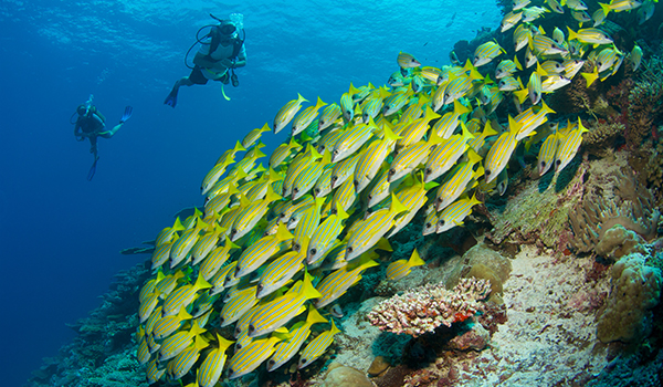 Mergulho em Maldivas