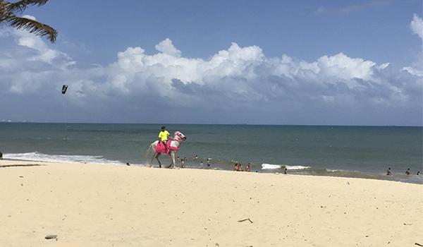 Cavalgadas à beira mar