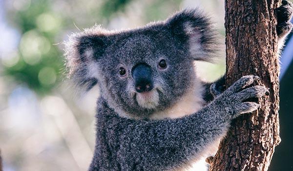 Animais da Oceania nas viagens