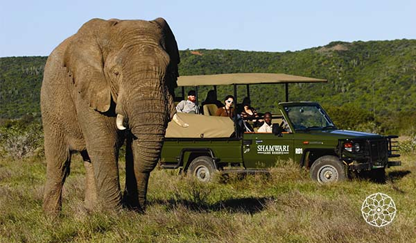 Tanzânia o que fazer: safáris espetaculares, praias, vulcão e muito mais