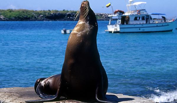 Os animais da América do Sul como diferenciais para viagem