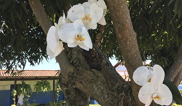 Abadiânia e Pirenópolis em Goiás, reduto de espiritualidade