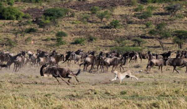 Aventuras do continente africano