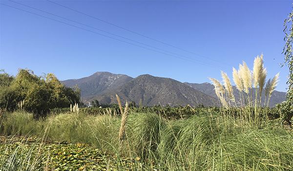 Vinícolas no Chile, qual visitar? Sugestão de três experiências incríveis